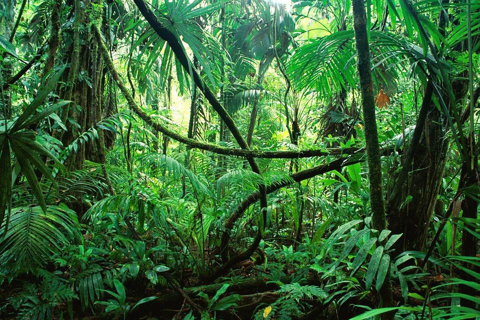 Blitz im Dschungel