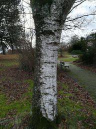 Wie man Bäume im Winter erkennt – Waldläufer Info #2
